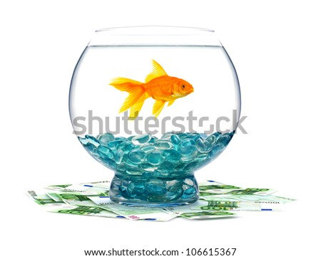 Goldfish and money in aquarium on a white background - stock photo