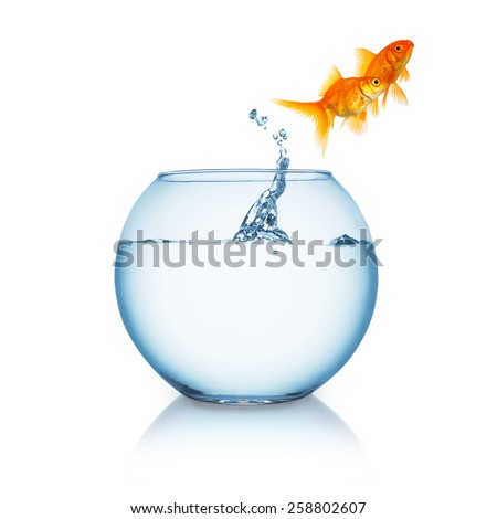 Goldfish couple jumps out of a fishbowl - stock photo