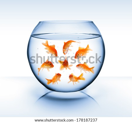 goldfish  - diversity  concept, bullying and isolation - stock photo