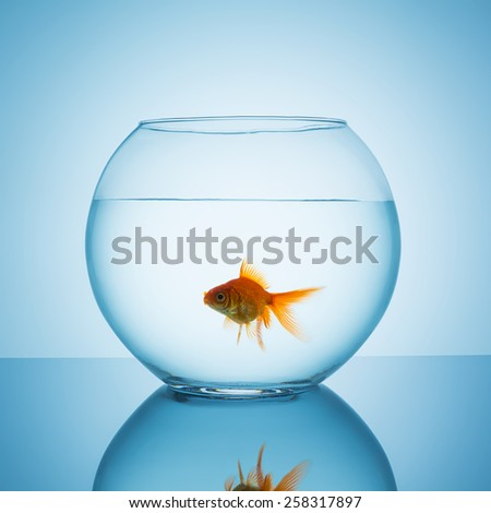 goldfish in a bowl glass on blue background - stock photo