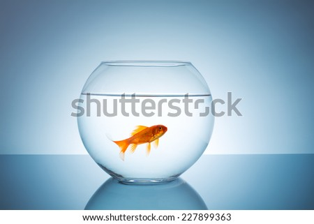 Goldfish in a fishbowl  - stock photo