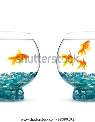 Goldfish in aquarium on a white background - stock photo