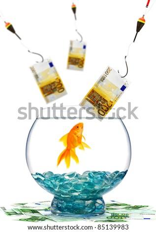 Goldfish in aquarium on white background - stock photo