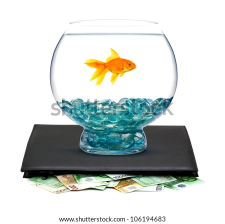 Goldfish in aquarium with money on a white background - stock photo