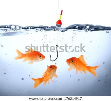 goldfish in danger - concept deception - stock photo