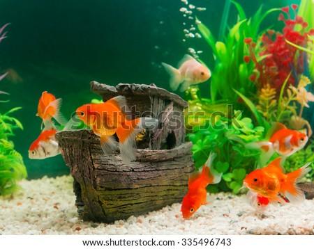 Goldfish stock photos images pictures shutterstock for Aquarium original poisson rouge