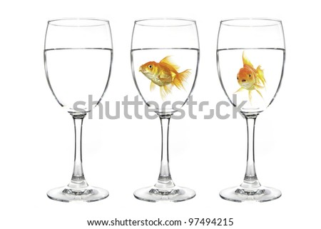 Goldfish in water on white background - stock photo