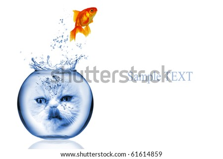 Goldfish jump out of aquarium with hungry cat face - stock photo