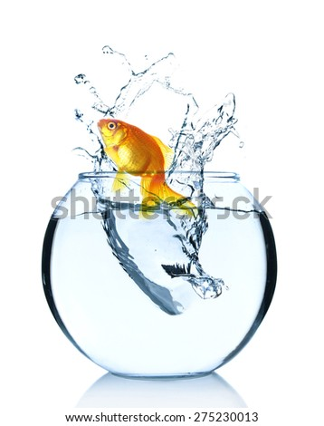 Goldfish jumping from glass aquarium, isolated on white - stock photo
