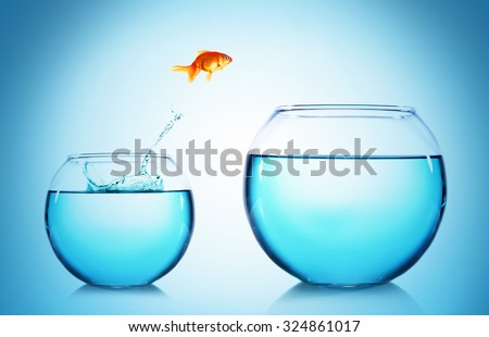 Goldfish jumping from glass aquarium, on blue background - stock photo