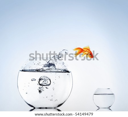 Goldfish jumping from the aquarium. Escape. - stock photo