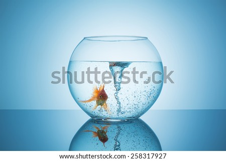 goldfish with a swirl in a fishbowl  - stock photo