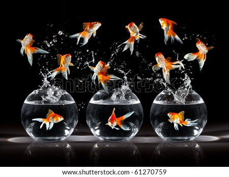 goldfishs jumps upwards from an aquarium on a dark background - stock photo