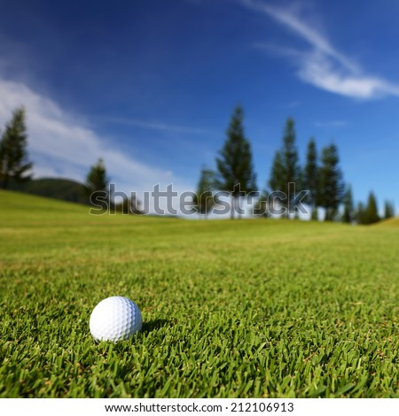Golf ball on the golf course  with pine tree and blue sky - stock photo