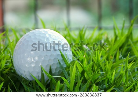Golf ball pose on green grasses among sunset low light tone represent the golf sport concept and related idea.   - stock photo
