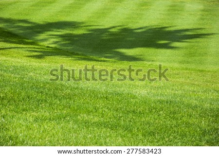 Golf course. Green field background/Golf background - stock photo