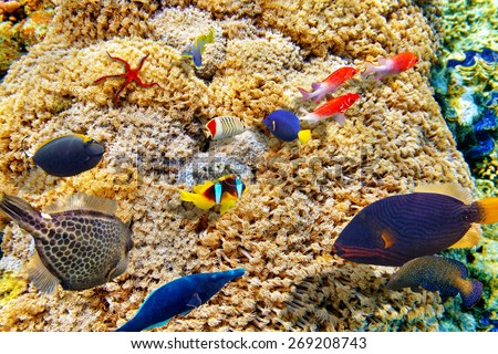 Goniopora djiboutiensis -wonderful  underwater world with corals and tropical fish. - stock photo