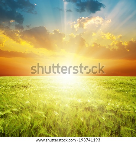 good orange sunset over green agriculture field - stock photo
