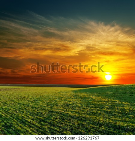 good sunset and green grass - stock photo