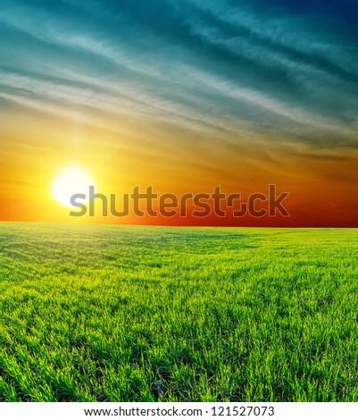 good sunset over green grass - stock photo