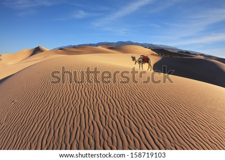 Gorgeous dromedary on sand dunes. Dromedary decorated with picturesque harness and bright red blanket - stock photo