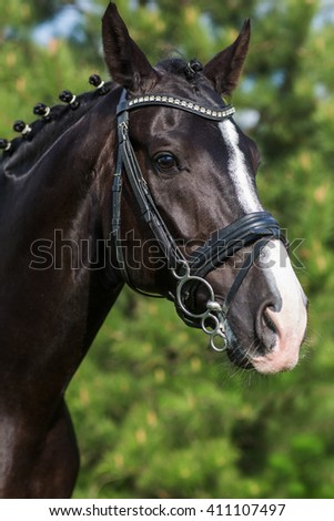 Gorgeous horse stallion portrait in the summer against greenery  - stock photo