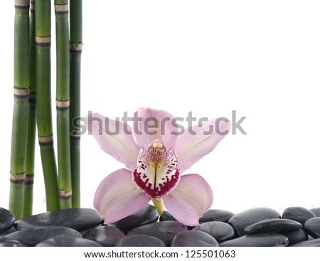 gorgeous orchid with bamboo grove on pebbles - stock photo