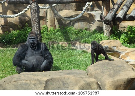 Gorilla and baby sitting on the grass at the zoo - stock photo