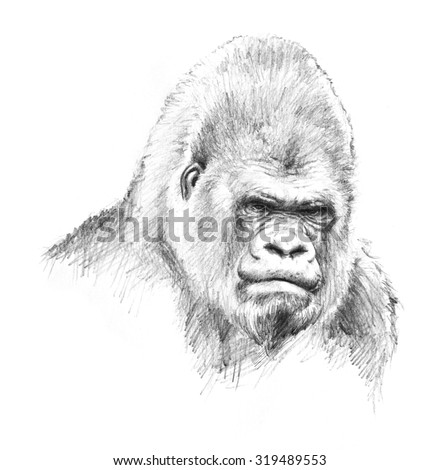 Angry Gorilla Face Drawing