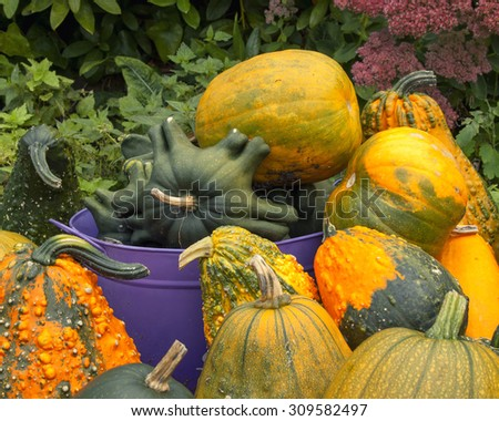 Gourds in different sizes, shape and color in and around purple metal tub; tightly cropped - stock photo