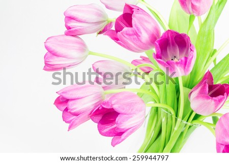 Graceful arcs of pink tulips in a glass vase. - stock photo
