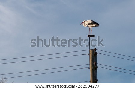 Graceful white stork on a wooden pole, looking out for its prey in front of a blue evening sky - stock photo