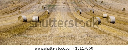 grain agriculture - stock photo