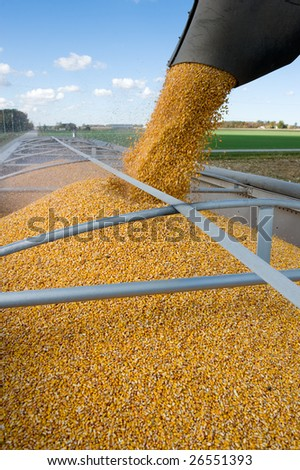Grain being loaded into a truck trailer. - stock photo