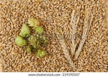 Grains and ears of barley with hops - stock photo