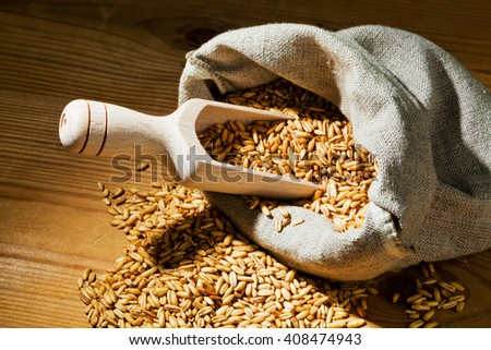 grains of oats - stock photo