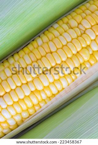 Grains of ripe corn.Fresh corn cobs. - stock photo