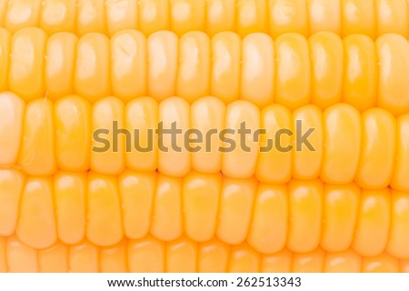 Grains of ripe Corn / Macro image - stock photo