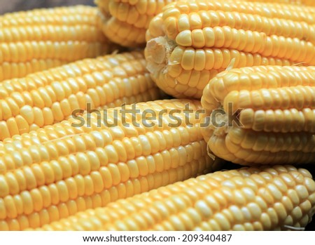 Grains of ripe corn.Raw corn, Fresh corn. - stock photo