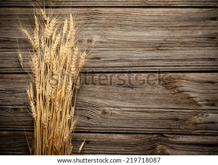 Grains  of Wheat on wooden background close up - stock photo