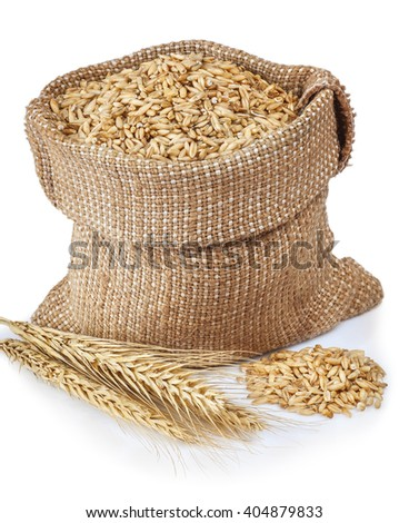 grains of wheat or rye in bag with bunch of dry ears isolated on white background - stock photo