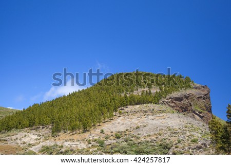 Gran Canaria, hiking route Cruz de Tejeda - Artenara, canarian pine trees on Montana de Artenara - stock photo