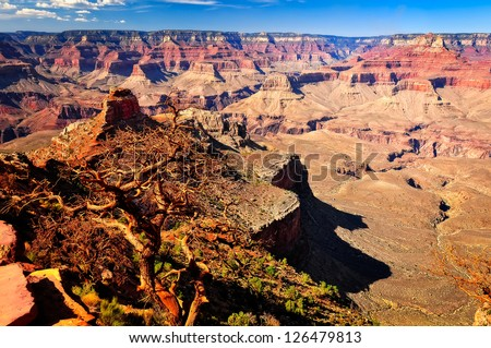 Grand canyon landscape view with cypress tree in foreground, Arizona, USA - stock photo