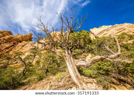 Grand Canyon, South Rim, South Kaibab trail - stock photo