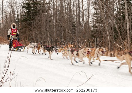 GRAND MARAIS MN - JANUARY 26: Mike Bestgen's team races on the trail during the Mid-distance portion of the John Beargrease Sled Dog Race. Bestgen finished 12th on January 26, 2015 in Grand Marais, MN - stock photo