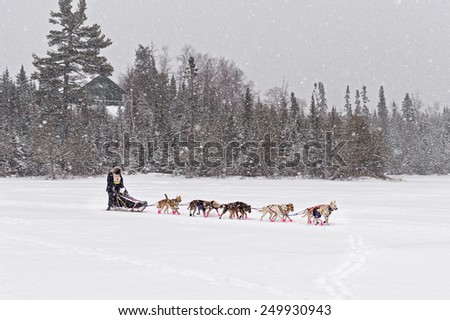GRAND MARAIS MN - JANUARY 26: Rita Wehseler's team leaves Trail Center Checkpoint in the Marathon portion of the John Beargrease Sled Dog Race. Wehseler scratched on January 27 2015 in Grand Marais MN - stock photo
