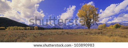 Grand Tetons and cotton tree in Grand Teton National Park, Wyoming - stock photo