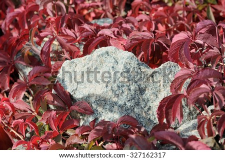 Granite stone entwined with vines - stock photo