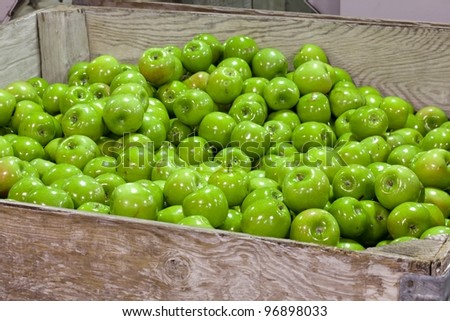 Granny Smith Apples in a cull bin in a fruit packing warehouse - stock photo