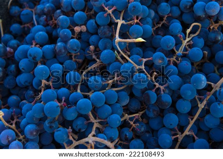 grape background - stock photo